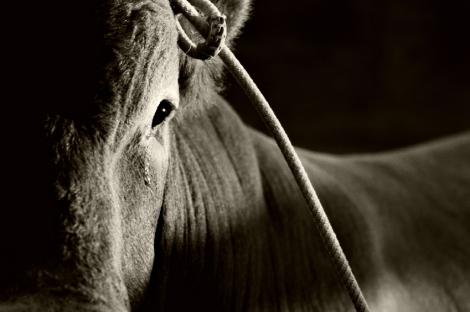 Asset Manager - Profit - Bull Market